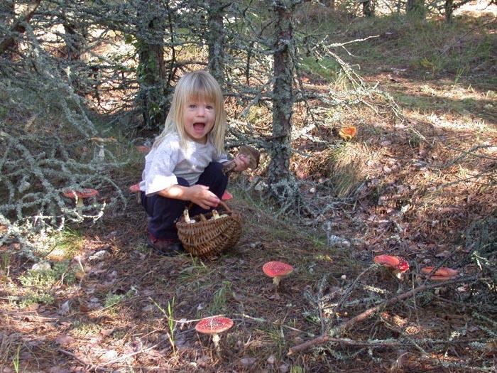 Поход в лес за грибами – история Валентины Бабиной